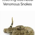 Teaching Kids About Venomous Snakes