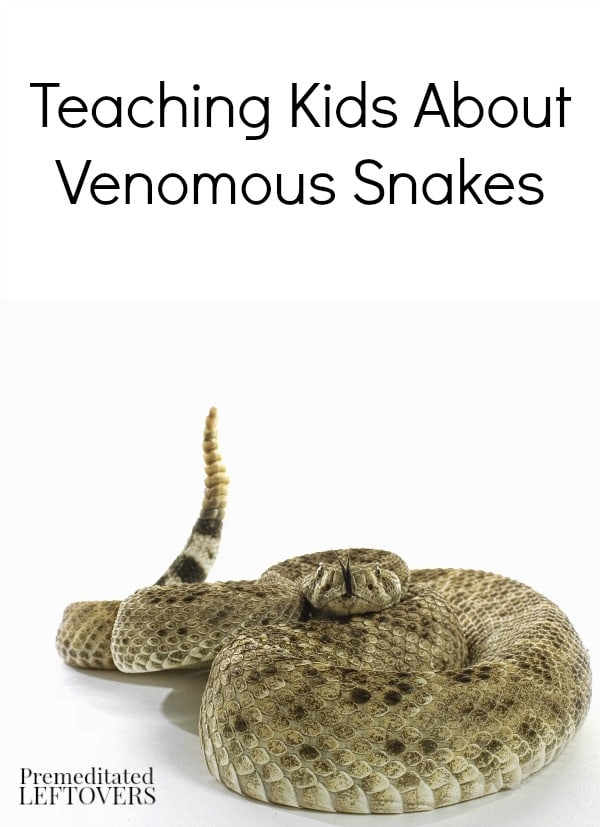 Teaching Kids About Venomous Snakes - Here are some tips for teaching your kids how to recognize venomous snakes and what to do if they encounter one.