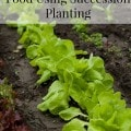 How to Use Succession Planting to Grow More Food