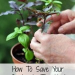 How To Save Your Garden In The Heat