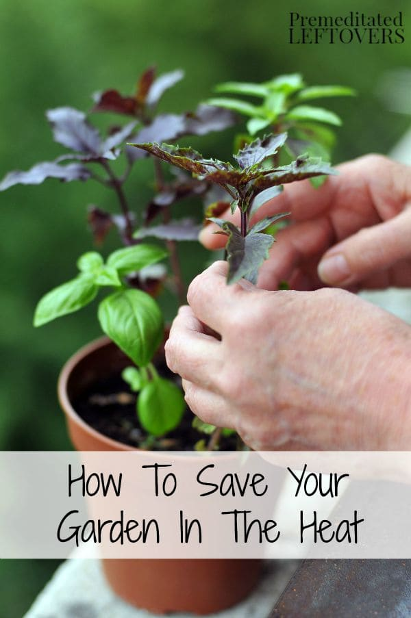 How to save your garden in the heat - Gardening in summer heat a small survival guide ...