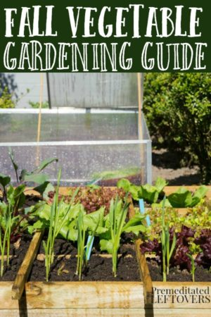 a list of vegetables to grow in a fall vegetable garden