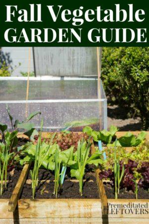 fall vegetable garden guide