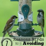 7 Reasons Birds May Be Avoiding Your Yard- Have you tried to get birds to your yard without any luck? Here are 7 possible reasons and some useful solutions.