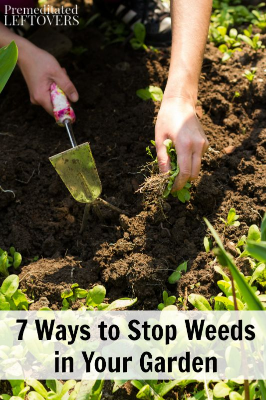 7 Ways to Stop Weeds in Your Garden- With these tips you can reduce your time spent weeding, skip the harsh chemical treatments, and win the weed battle.