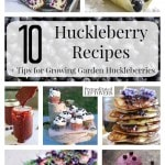 10 Awesome Huckleberry Recipes