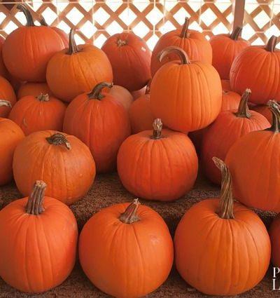 Northern Nevada Pumpkin Patches
