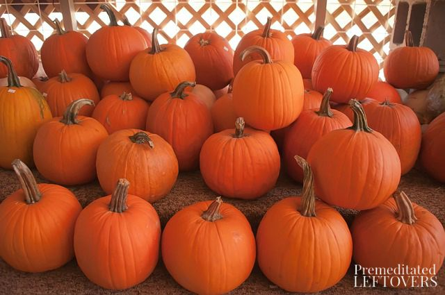 Northern Nevada Pumpkin Patches- Bring the kids out for family-friendly fun that includes corn mazes, hay rides, and more. Pick your favorite pumpkin, too!
