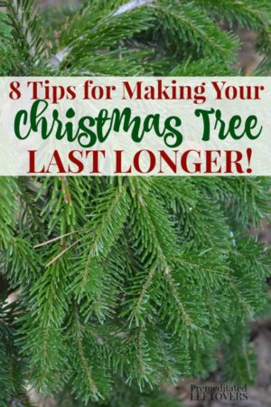 8 tips for making your Christmas tree last longer