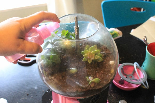 Upcycled Gumball Machine Terrarium