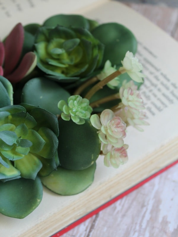DIY Succulents Book Planter-insert plant