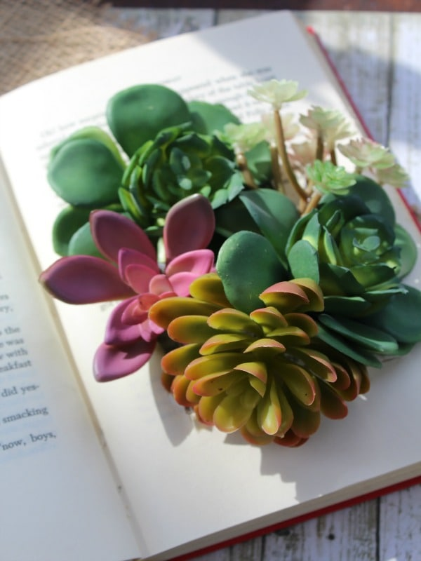 DIY Succulents Book Planter- final