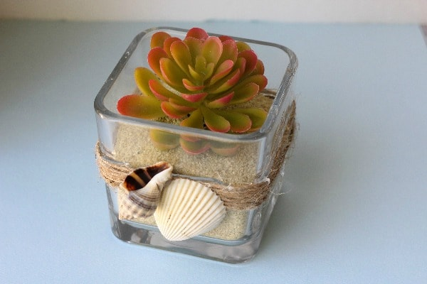 DIY Coastal Succulent Planter