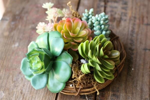 succulent spring nest