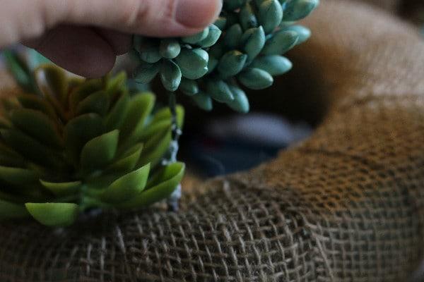 Frugal Dollar Tree Craft: Spring Succulent Wreath adding succulents