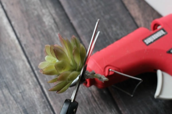 DIY Faux Succulent Napkin Rings- preparing succulent
