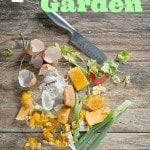 7 Food Scraps That Are Perfect for Your Garden