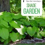 7 Tips for Growing a Shade Garden- If you have a shady yard, don't despair! These tips can help you grow lush and beautiful plants that thrive without sun.