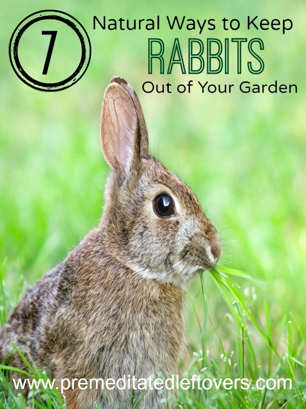 7 Natural Ways to Repel Rabbits from Your Garden
