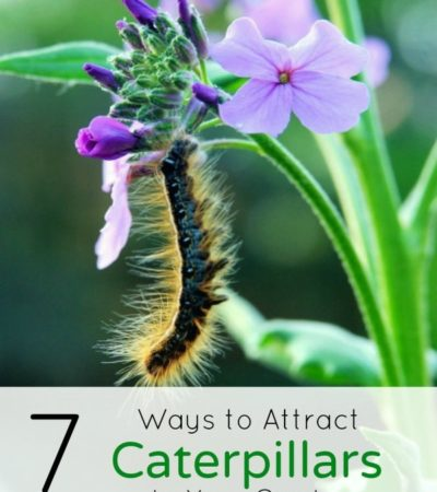 7 Ways to Attract Caterpillars to Your Garden- You can't enjoy butterflies without caterpillars! Lure caterpillars to your yard with these 7 helpful tips.