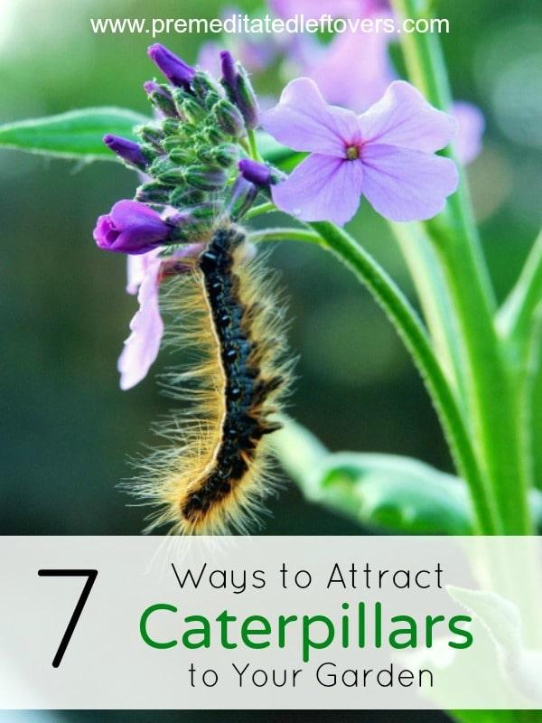 ways attract