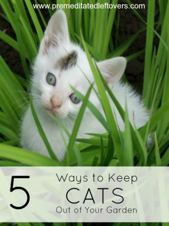 how to get rid of cat pee stains on carpet