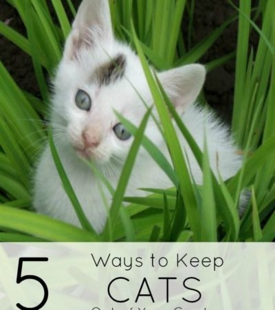 5 Ways to Keep Cats Out of Your Garden- Cats can cause trouble in your garden in a number of ways. These safe and humane strategies will keep them out.