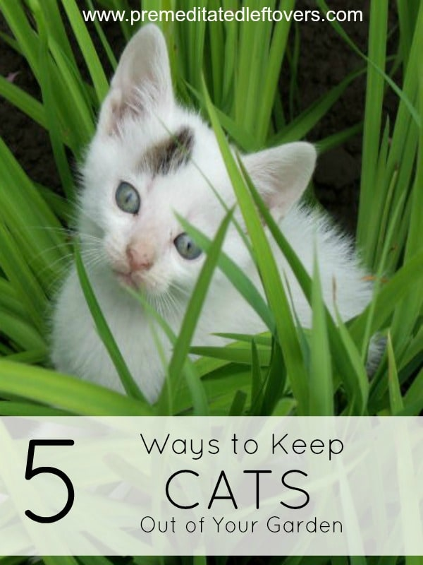 How to keep cats out of the garden how to keep cats out of your garden 100 things 2 do 4 ways How to keep raccoons out of garden