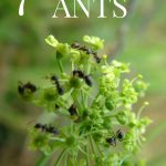 Tips for Repelling Ants