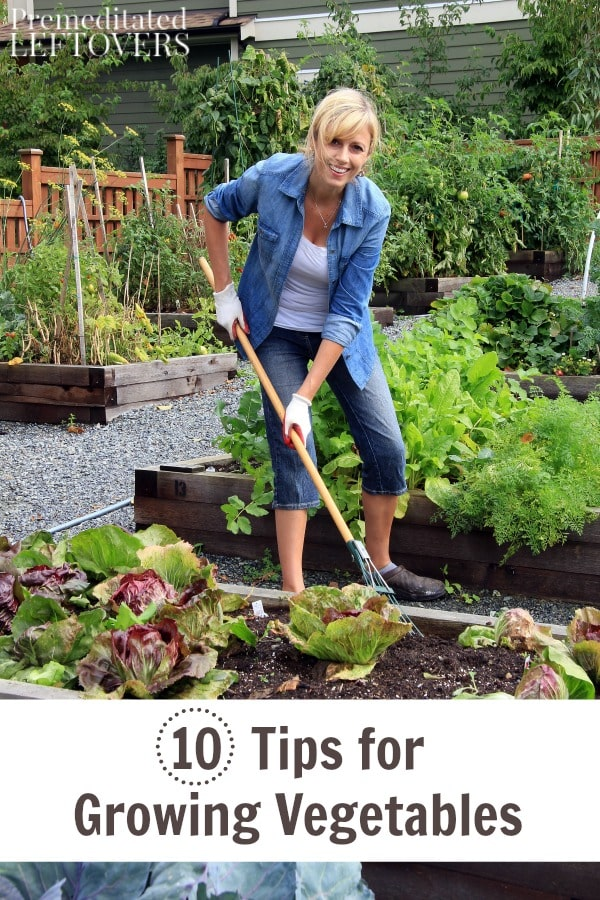 10 tips for growing vegetables for Gardening 101 vegetables
