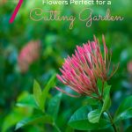 7 Flowers for Your Cutting Garden- Planting specific flowers in your garden is ideal if you would like to cut and display them. Here are some great choices!