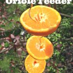 Learn How to Make an Oriole Bird Feeder using wire and oranges. This feeder is an easy and frugal way to attract beautiful orioles to your yard.
