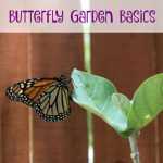 Butterfly Garden Basics- Attract beautiful butterflies to your yard with these simple tips and tricks for creating a butterfly garden.