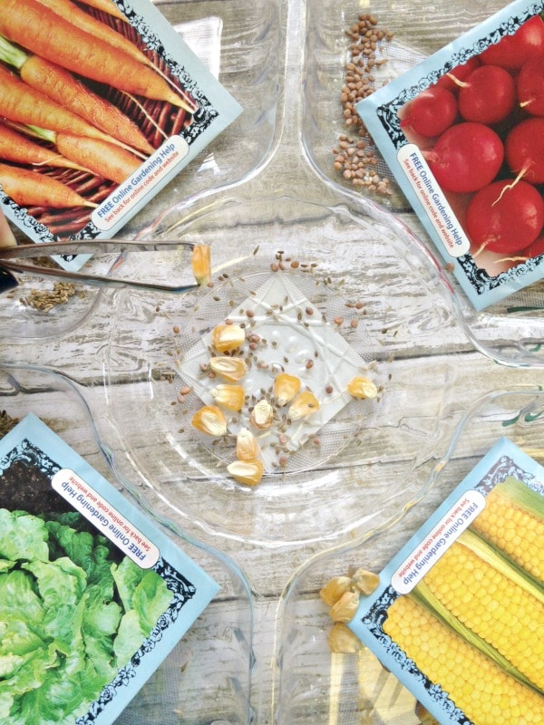 Seed Sorting Sensory Activity for Kids sorting
