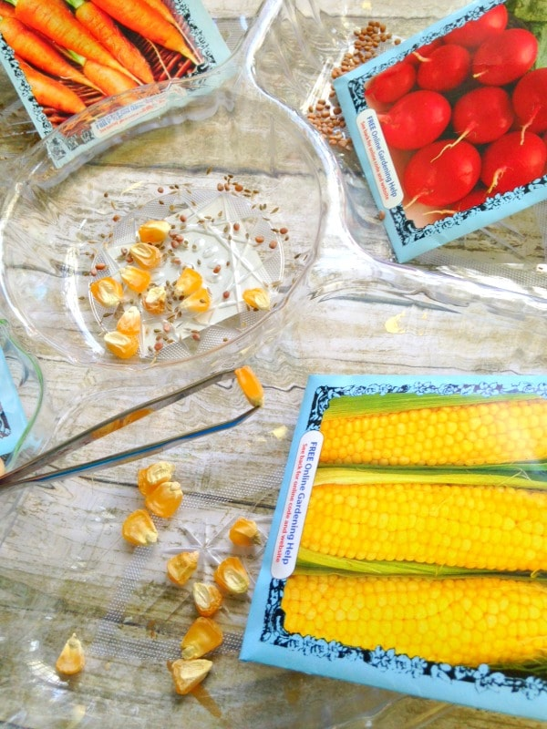Seed Sorting Sensory Activity for Kids sorting seeds