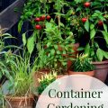 Container Gardening 101- Are you new to container gardening? Here are some helpful tips, tricks, and ideas to make your container garden a success!