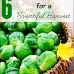 6 Fall Garden Plants for a Bountiful Harvest