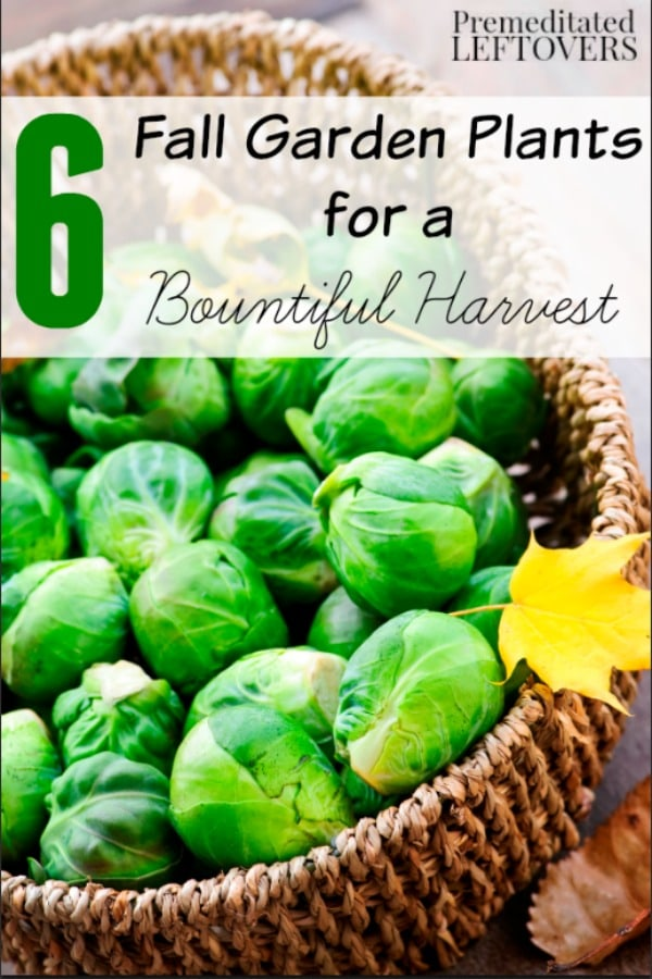 6 Fall Garden Plants for a Bountiful Harvest- These hardy vegetables and herbs can thrive through cold temperatures. They are perfect for your fall garden!