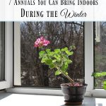 7 Annuals You Can Bring Indoors During the Winter