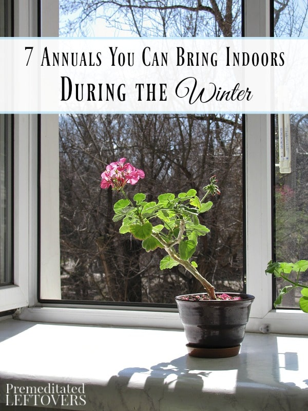 7 annuals you can bring indoors during the winter for Indoor gardening during winter