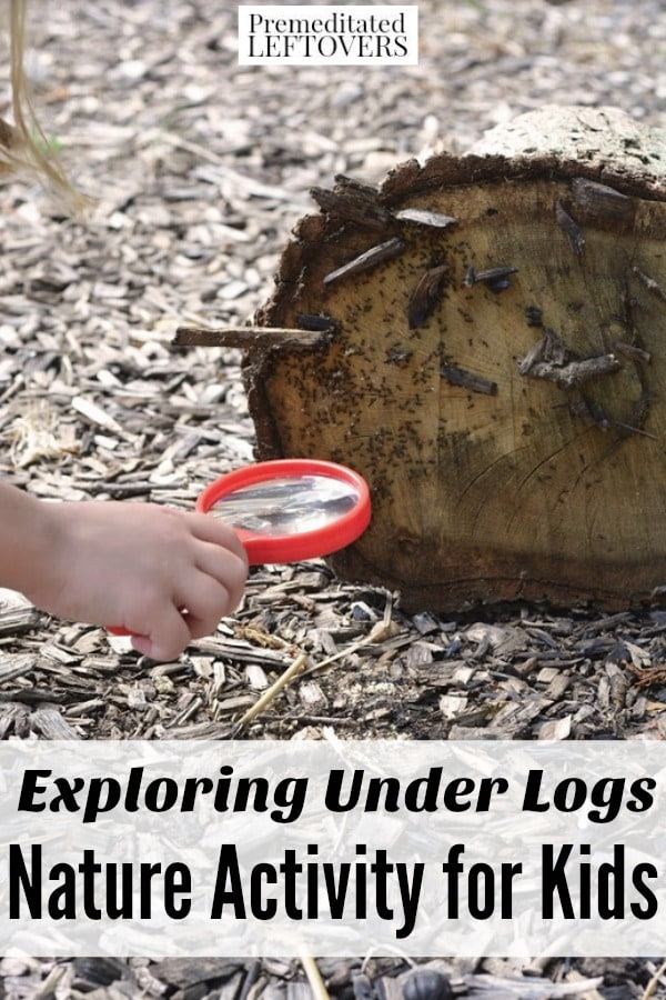 Kids can be detectives with this Exploring Under Logs Nature Activity. It's a fascinating way for them to take a closer look at insects and ecosystems.