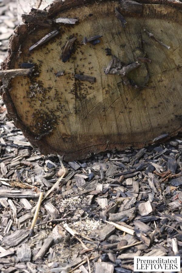 Exploring Under Logs Nature Activity- looking under log