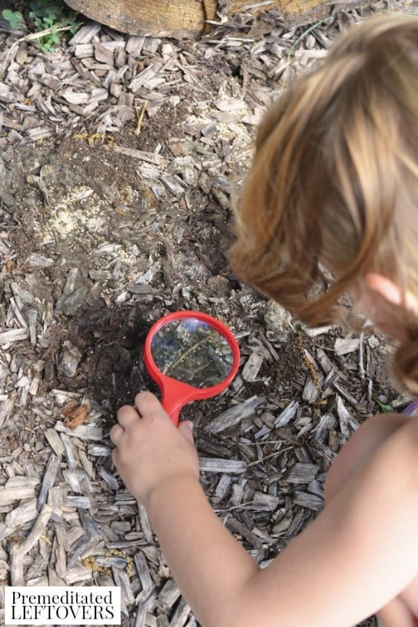 Exploring Under Logs Nature Activity- using magnifying glass