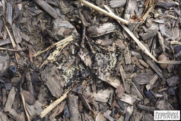 Exploring Under Logs Nature Activity- larvae in the dirt