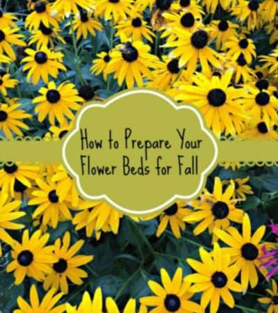 How to Prepare Your Flower Gardens for Fall - useful fall gardening tips