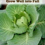 6 Crops That Will Grow Well into Fall