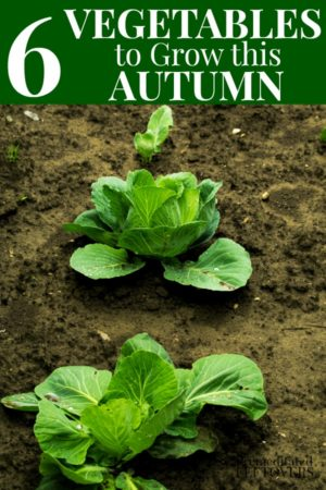6 vegetables that grow well in the fall.