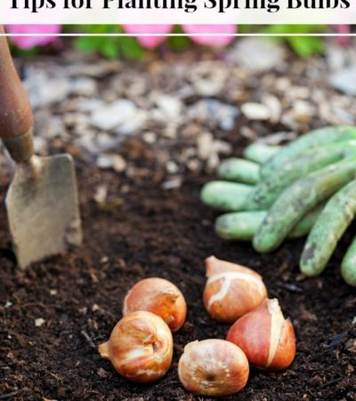 These Tips for Planting Spring Bulbs include when and where to plant your flower bulbs for optimal growth. Come spring, your garden will look spectacular!