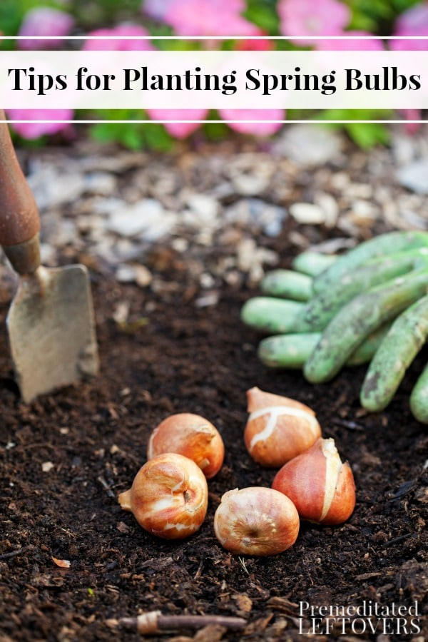 These Tips for Planting Spring-Blooming Bulbs include when and where to plant your flower bulbs for optimal growth. Come spring, your garden will look spectacular!