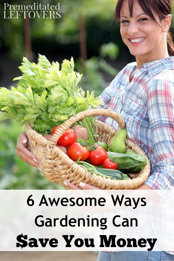 Not only is gardening a fun and rewarding hobby, it can also save you money on all sorts of things. Here are 6 Awesome Ways Gardening Can Save You Money.